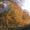 Woodland at Burlish Top