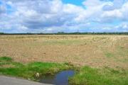 Farmland and Pylons near Southbourne