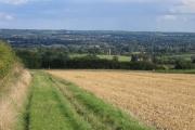 Looking across field to Birling Church
