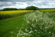 Keck and oil seed rape