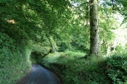 Whitestaunton: by Cinder Hill Copse