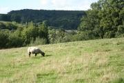 Whitestaunton: near Southcroft