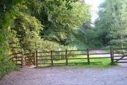 Ermington Wood