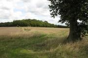 Chapel Wood