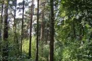 Ben Stedham's Wood