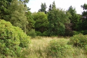 Cranley Wood