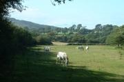 Farmland at Bodfel