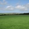 Verdant Pasture