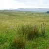 Rough grazing in the Comeraghs