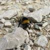 Bumble Bee on Fell lane.