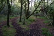 Woodland on Heathfield Down