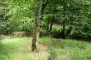 Rackenford: approaching a stream