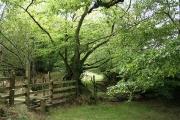 Rackenford: between Lower Bulworthy and Tidderson Moor