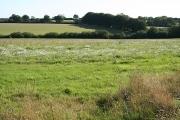 Thelbridge: farmland near Foxdon