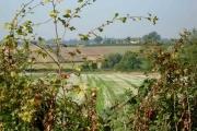Farmland near Willoughby Waterleys
