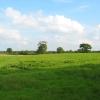 Pasture near Ightfield Hall