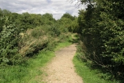 Edlington Wood