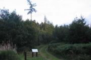 Piperhill Wood