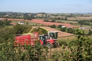 Cullompton: maize harvest