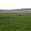 Pasture near Wingfield Farm