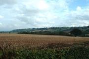 Farmland near Acton Round