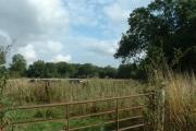 Farmland near Muckley