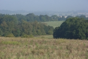 Anville's and Great Sadler's Copses
