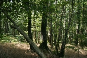 Stoodleigh: Great Wood