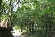 Hunsterson Road at Chapel Wood