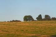 Strawberry Hill