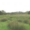 Rough Grazing Alongside Afon Carrog