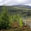 Mixed forestry plantation