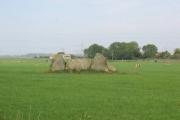South Leylodge Stone Circle