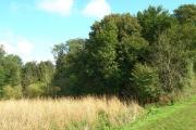 Bogs Wood