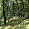 Twitchen: Leworthy Wood