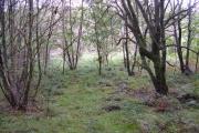 Miry woodland near Burley Wood Cottage.