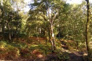 Grimethorpe Woods