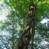 Waingroves woods tree carvings