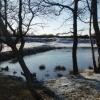 Headley Heath Pond